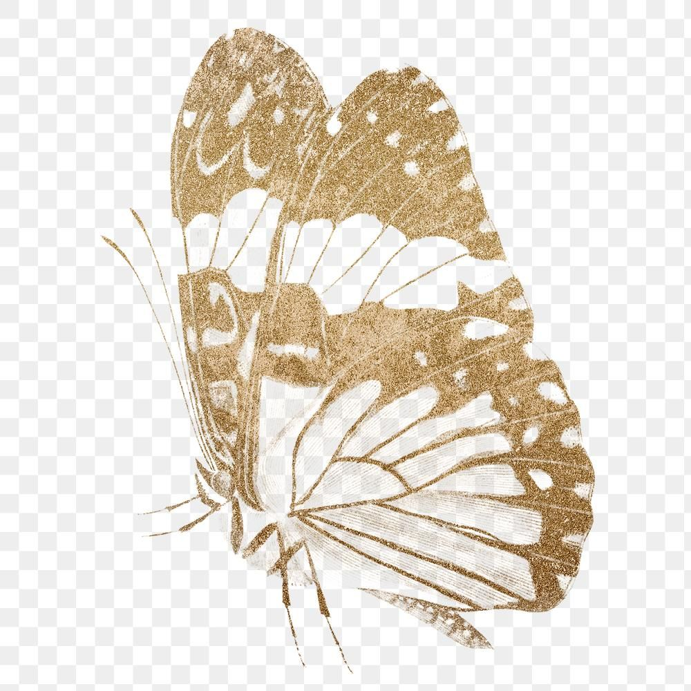 Glittery Vintage Gold Butterfly Png Sticker Premium Image By Rawpixel Com Hein Gold Butterfly Vintage Gold Png