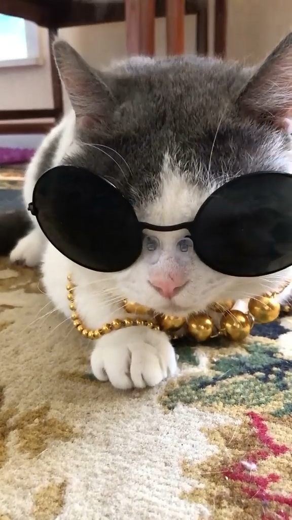 ✔ Funny Cats Video With Glasses #funnymeme #funnyvideo #funnyaf