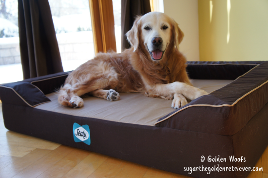 Your Dog Deserves A Restful Sleep On A Sealy Bed Dogs
