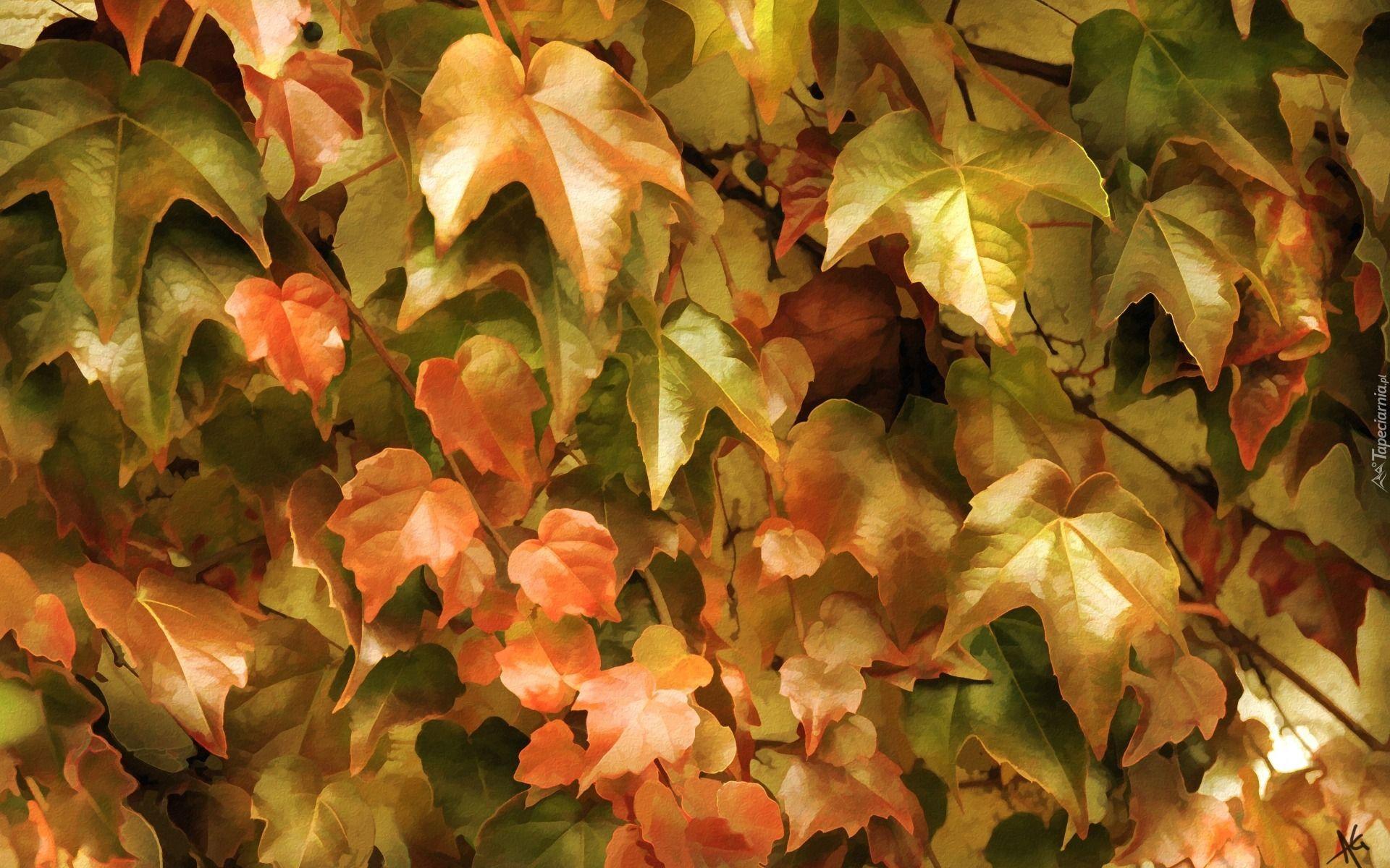 Edycja Tapety Jesienne Liscie Bluszczu W Grafice Leaves Plants Inspiration