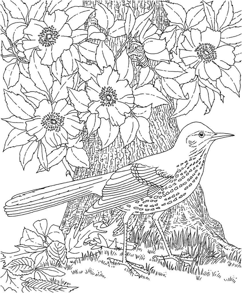 Free coloring pages online adults - Bird Robin Free Adult Printable Coloring Pages Flowers