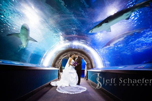Wedding Newport Aquarium