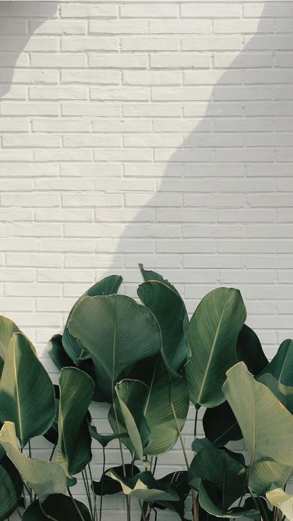 lockscreens; #kaktus background green plants   Tumblr #wallphone