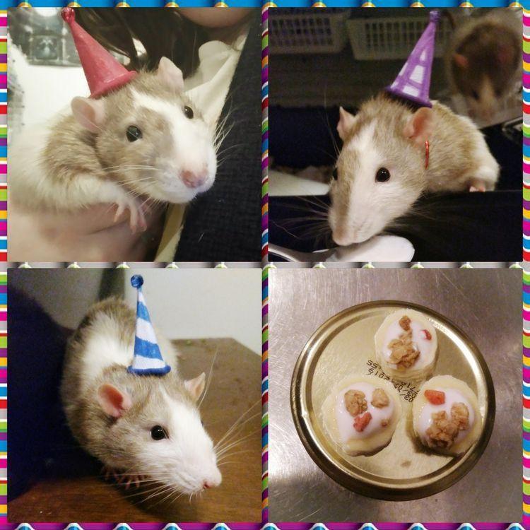Cute Animals おしゃれまとめの人気アイデア Pinterest Leslie Wilson ペット 動物 ネズミ