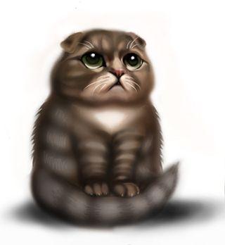 sad cat highland fold