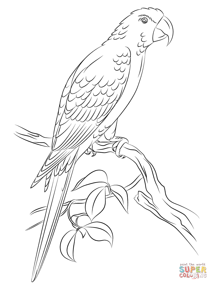 jamaican macaw coloring bird coloring pages
