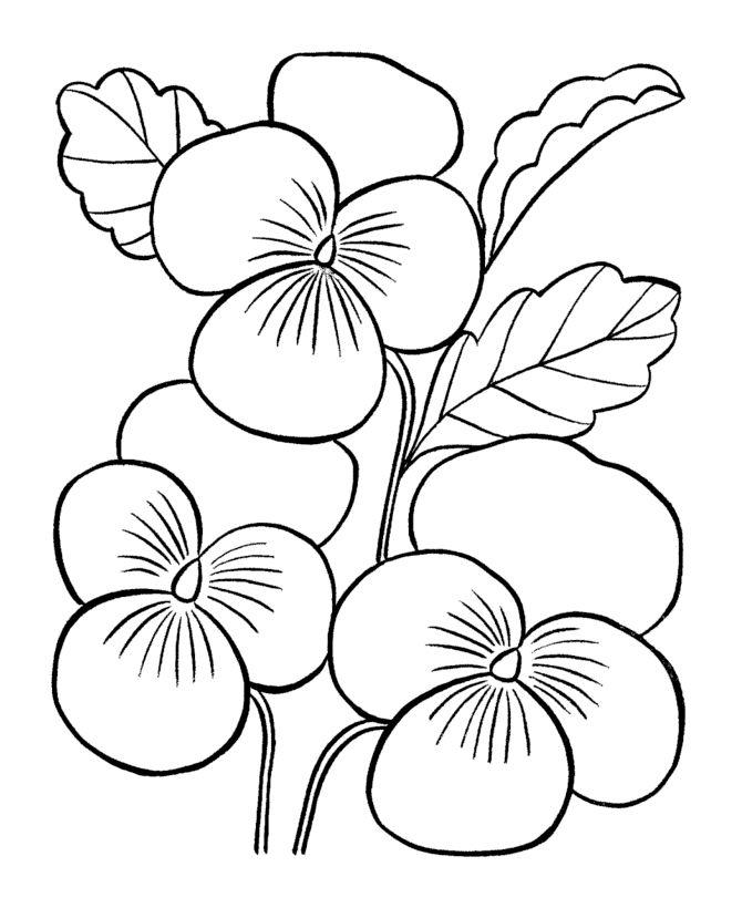 Desene De Colorat Planse Flori Panselute Desene Adult