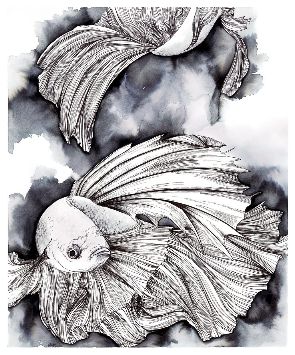 Pen And Ink Drawing Of Betta Fish Betta Splendens Art Pinterest