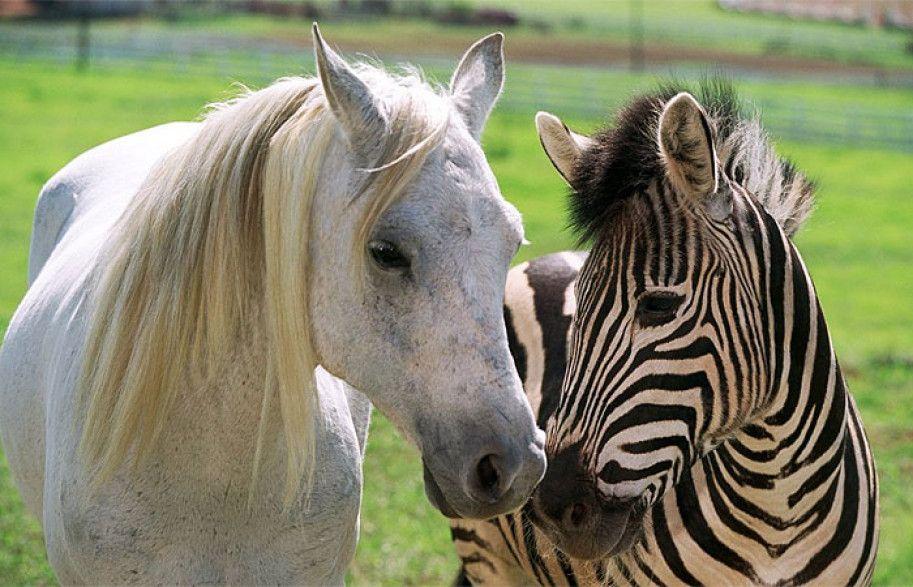 Image associée Racing stripes, Horses, Horse wallpaper