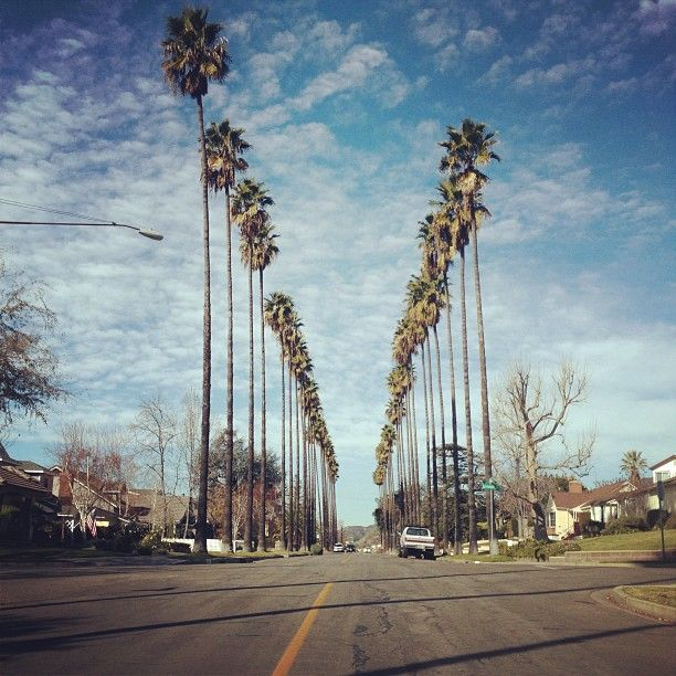 Palm Tree Lined Streets In Burbank In Los Angeles Ca Los Angeles Pinterest Trees Cas And