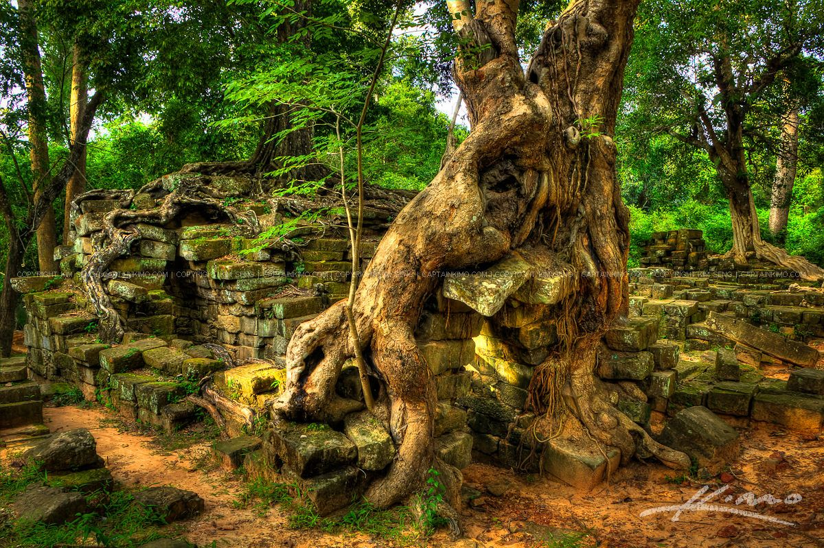 wpid20258-Over-Grown-Trees-on-Old-Temple-Ruins-Cambodia.jpg (JPEG Image, 1200×799 pixels) - Scaled (75%)