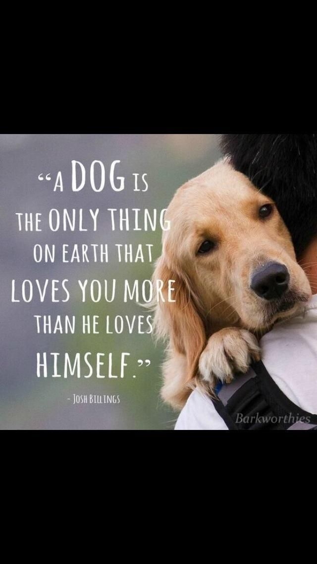 Adopt Don T Shop On Dog Quotes Dog Love Animal Quotes