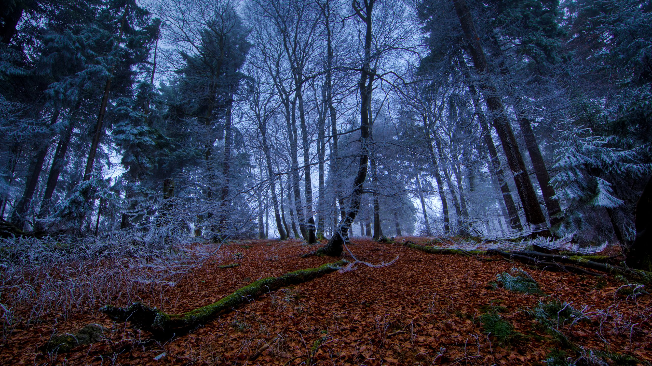 Forest Tree Night 2560x1440 Hd Wallpaper And Free Stock Photo Forest Pictures Night Forest Nature Wallpaper