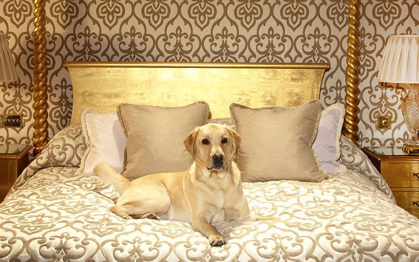 The Best Pet Friendly Hotels In Britain Dog Friendly Hotels