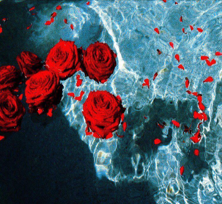 """""""Donde no puedas amar, no te demores""""🥀 Dark red roses"""