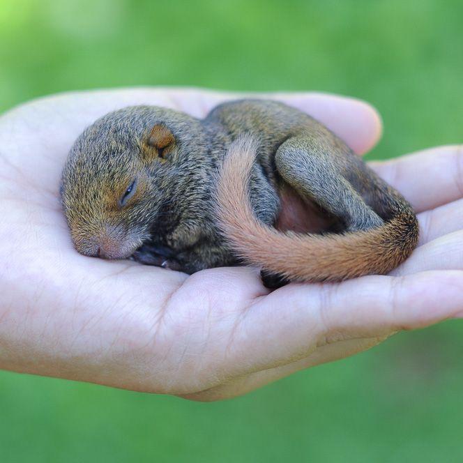 What do Squirrels Eat - Animal Sake   Baby Squirrel Diet