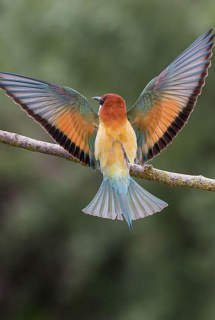 bird wings spread - HD859×1280