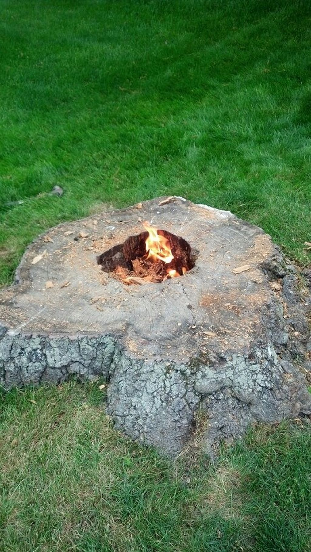Stunning 30 Use An Old Tree Stump To Make A Garden Path Https Gardenmagz Com 30 Use An Old Tree Stump To Landscaping Around Trees Garden Fire Pit Tree Stump