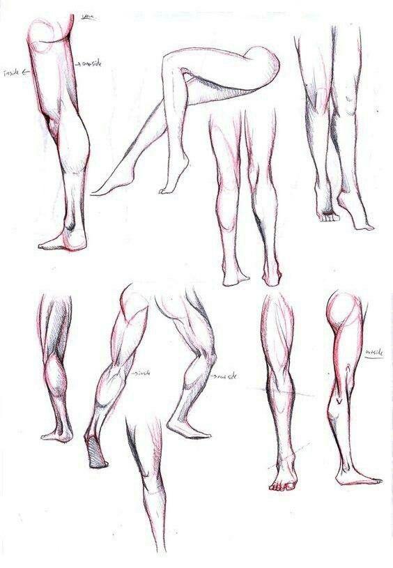 Pin de Luz Sonido en Anatomía | Pinterest | Anatomía, Figuras ...