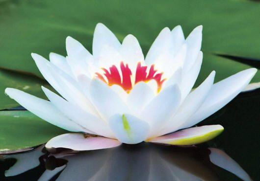 Экзотические белые цветы с фото и названиями   Красивые ...