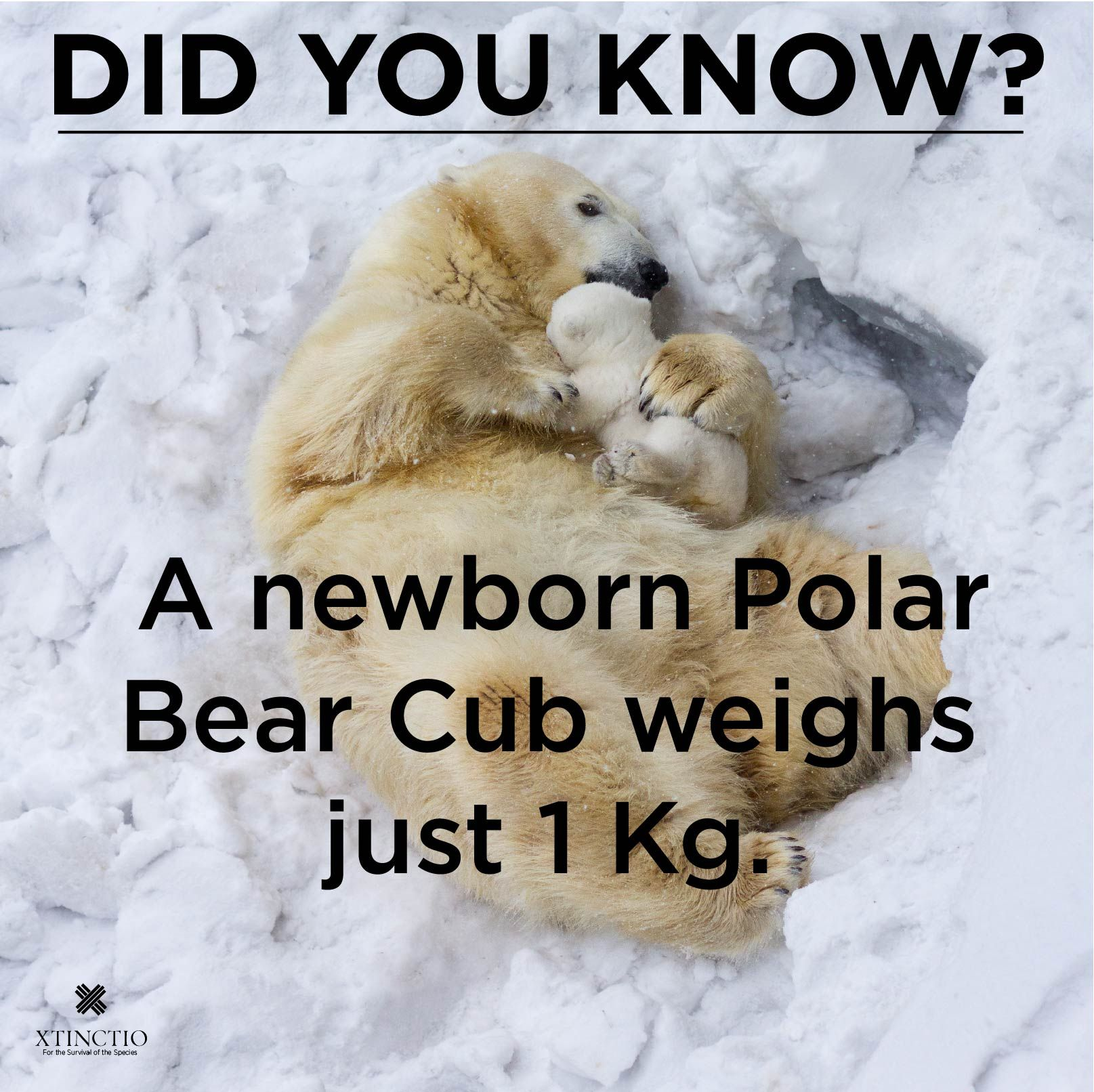 Polar bears are one of the most iconic and wellloved