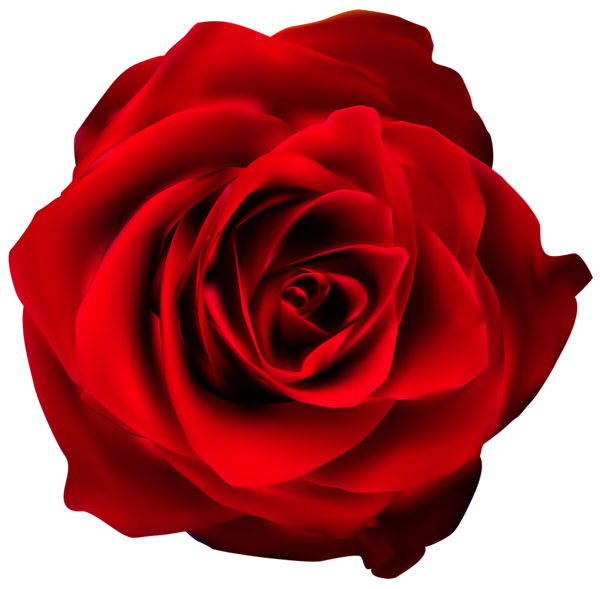 Red Rose Transparent PNG Clip Art Image