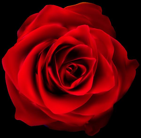 Red Rose Transparent Png Clip Art Image Cores Flores Decoupage