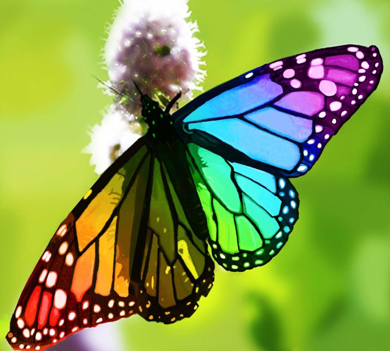 Beautiful Rainbow Butterflies Butterfly  Tumblr