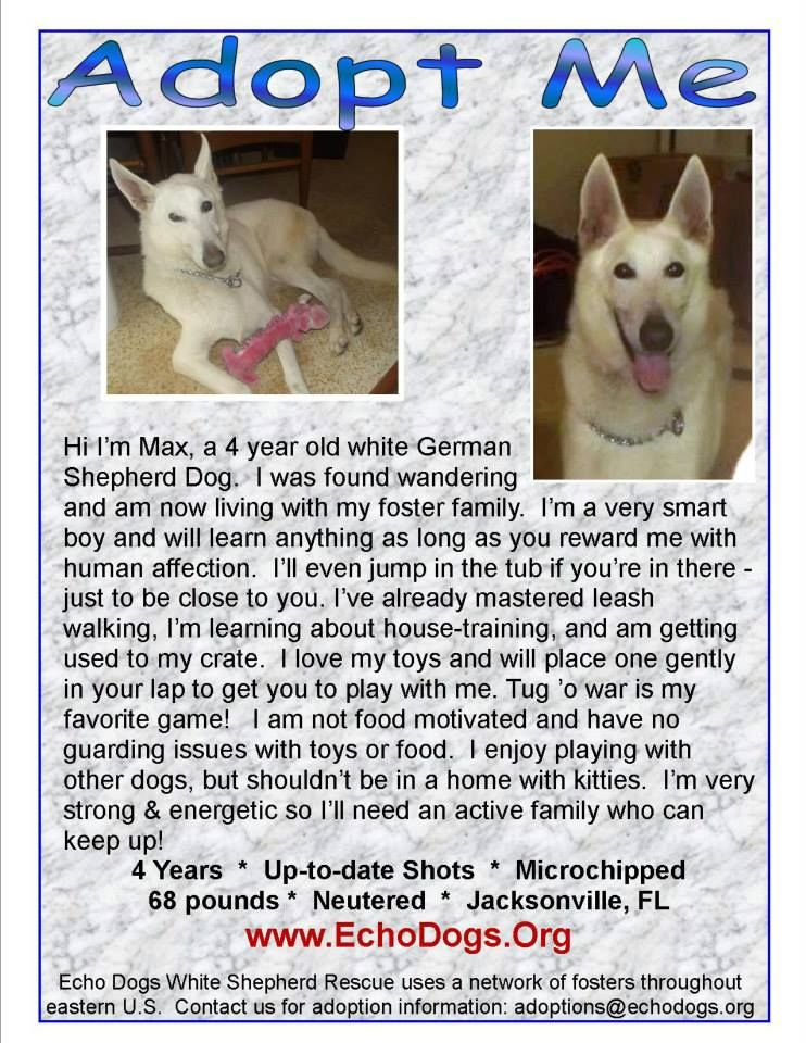 Echo Dogs White Shepherds for Adoption Liked · Yesterday
