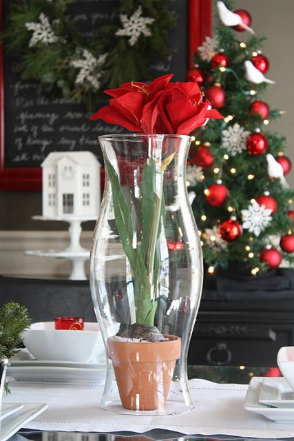 like this idea of using the hurricane lamp with the amaryllis