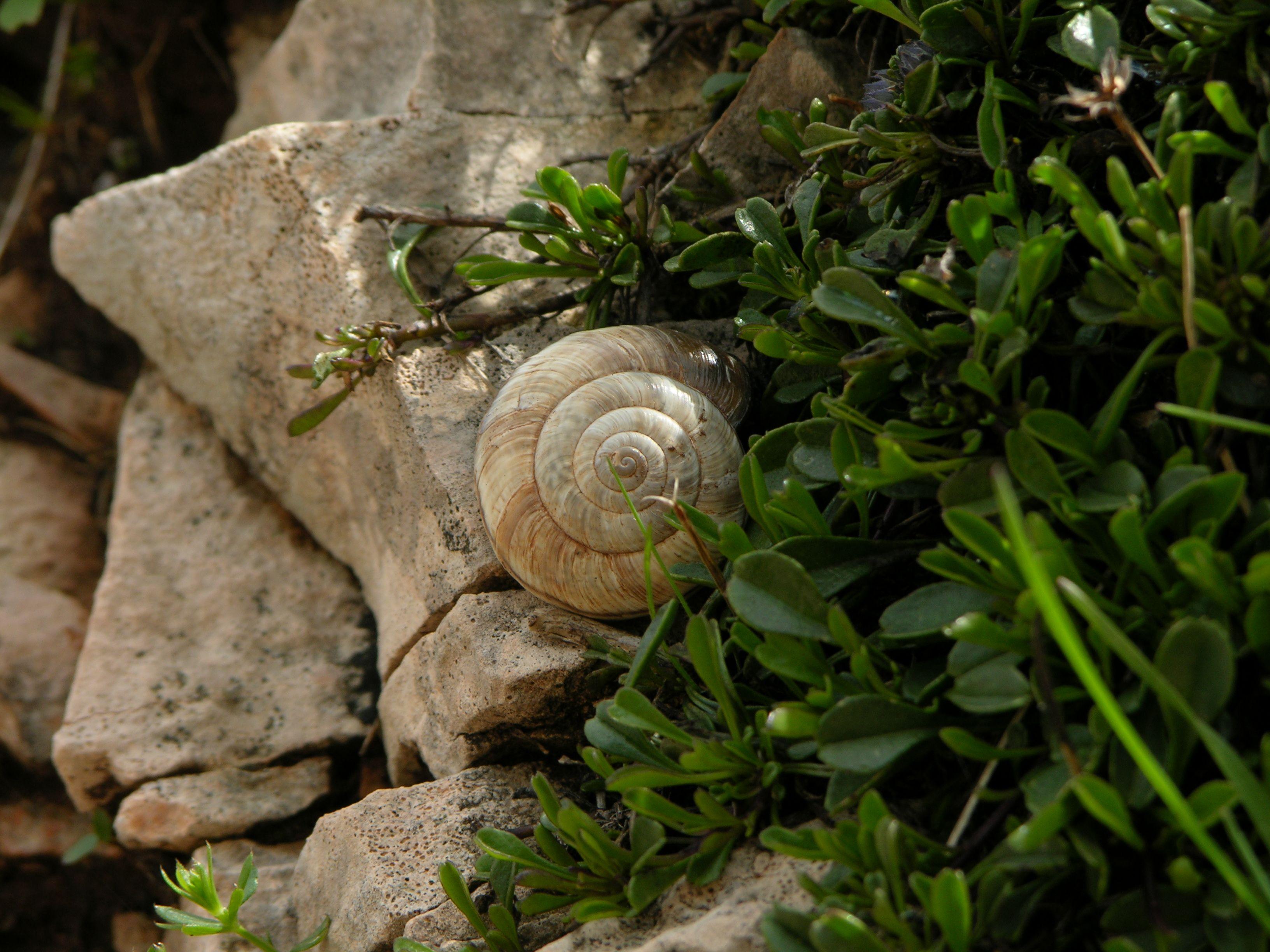 Schnecke vom Gardasee
