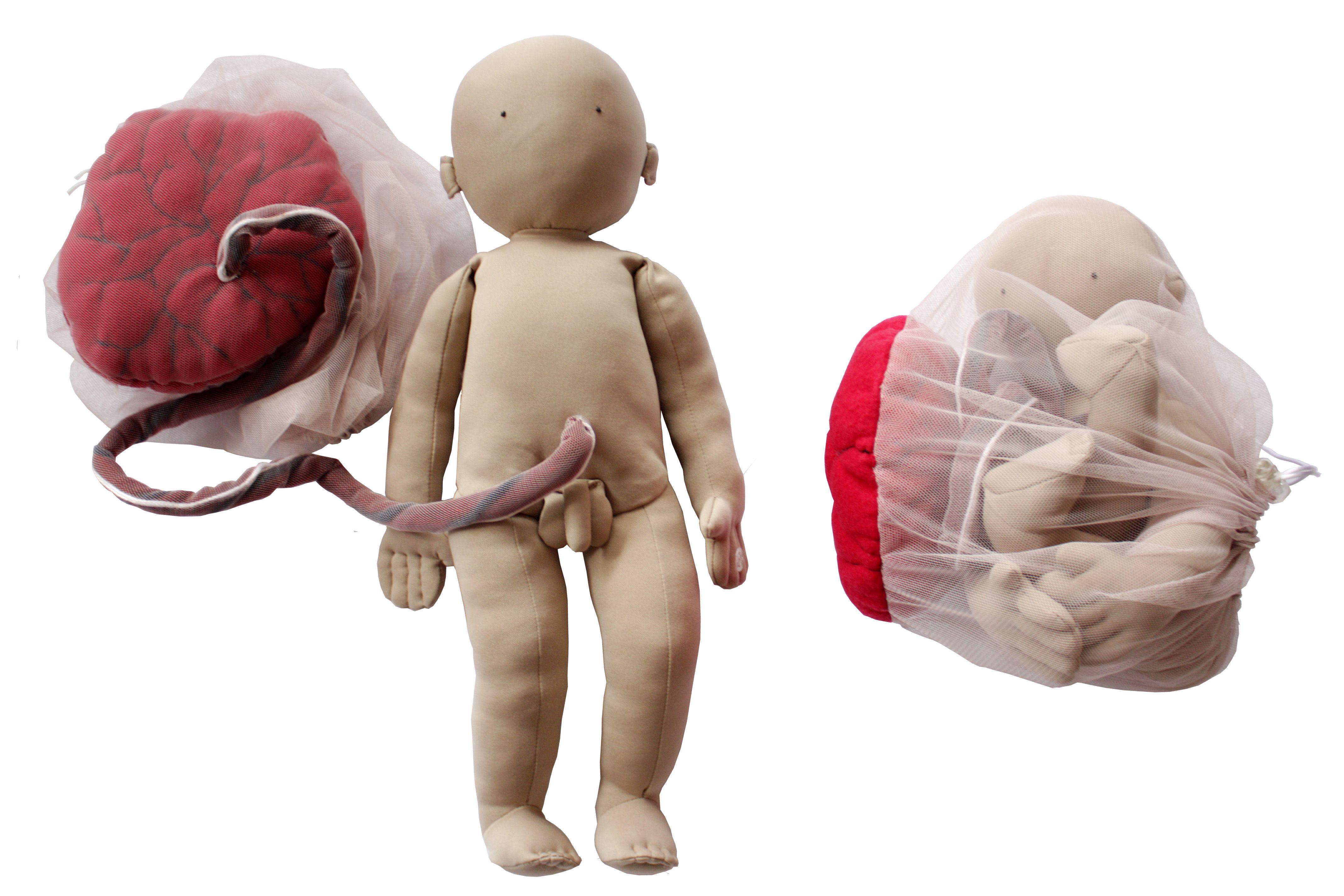 Muñeco de tela de aprendizaje, con placenta y saco amniótico. El ...