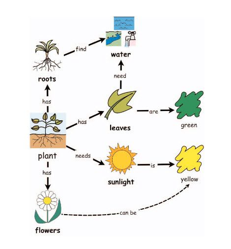 Concept Map About Plants Can Be Used As Pre Reading Strategy To