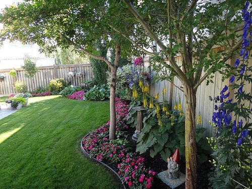 Small shade trees along fence #ShadePlants   Landscaping ...
