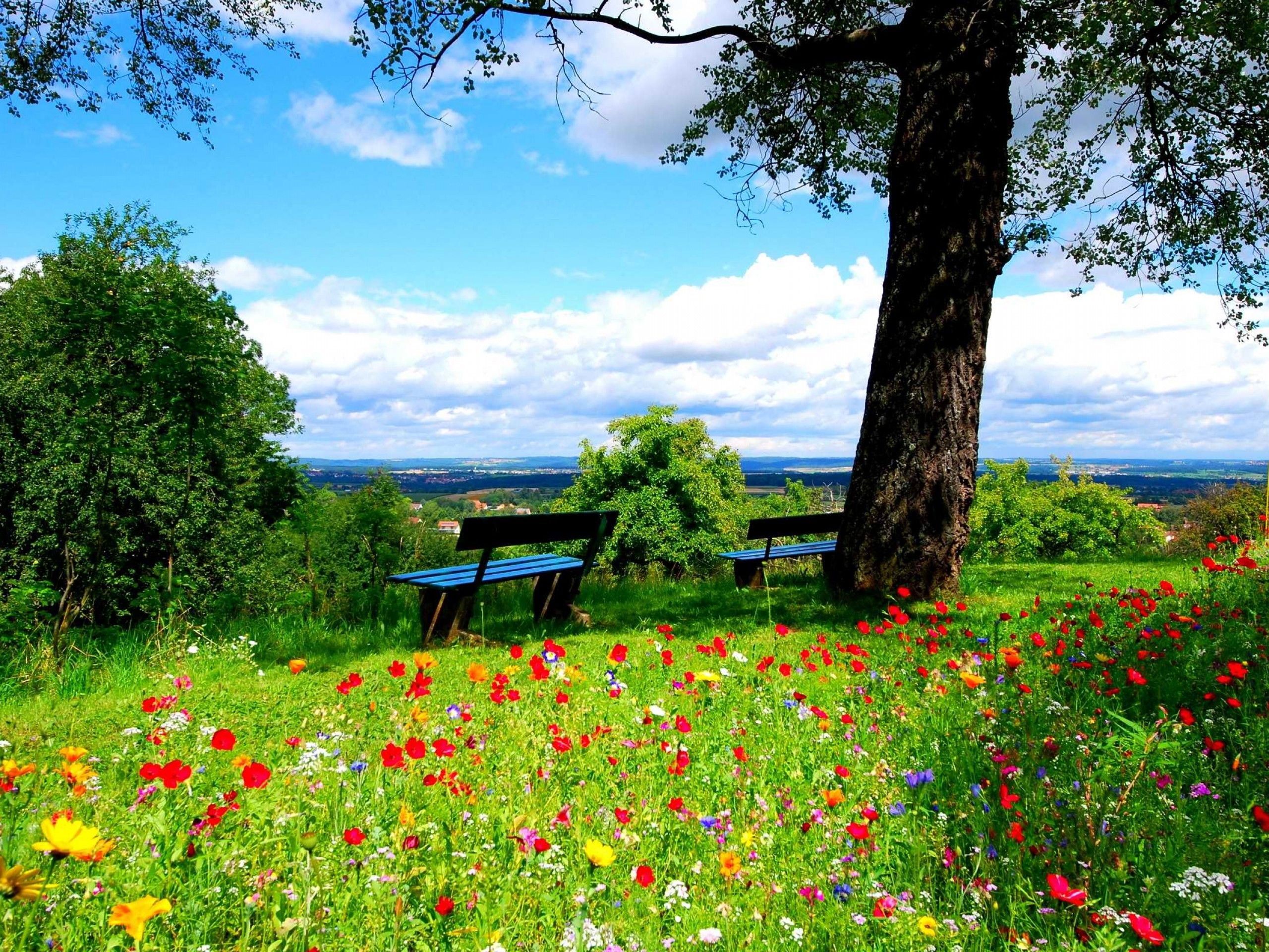 Dream Spring Peaceful Place