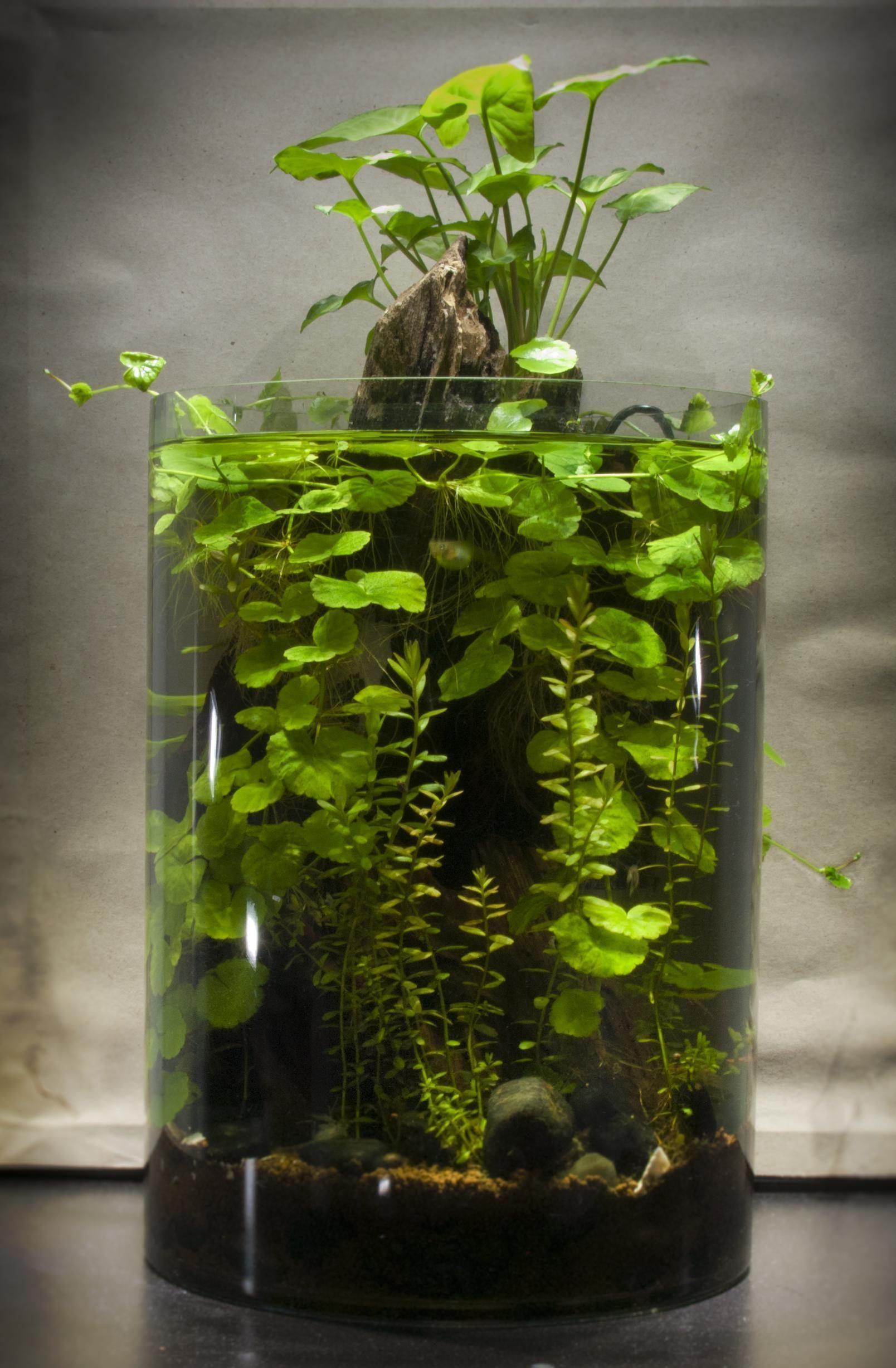 indoor water garden in 2020   Indoor water garden, Aquarium