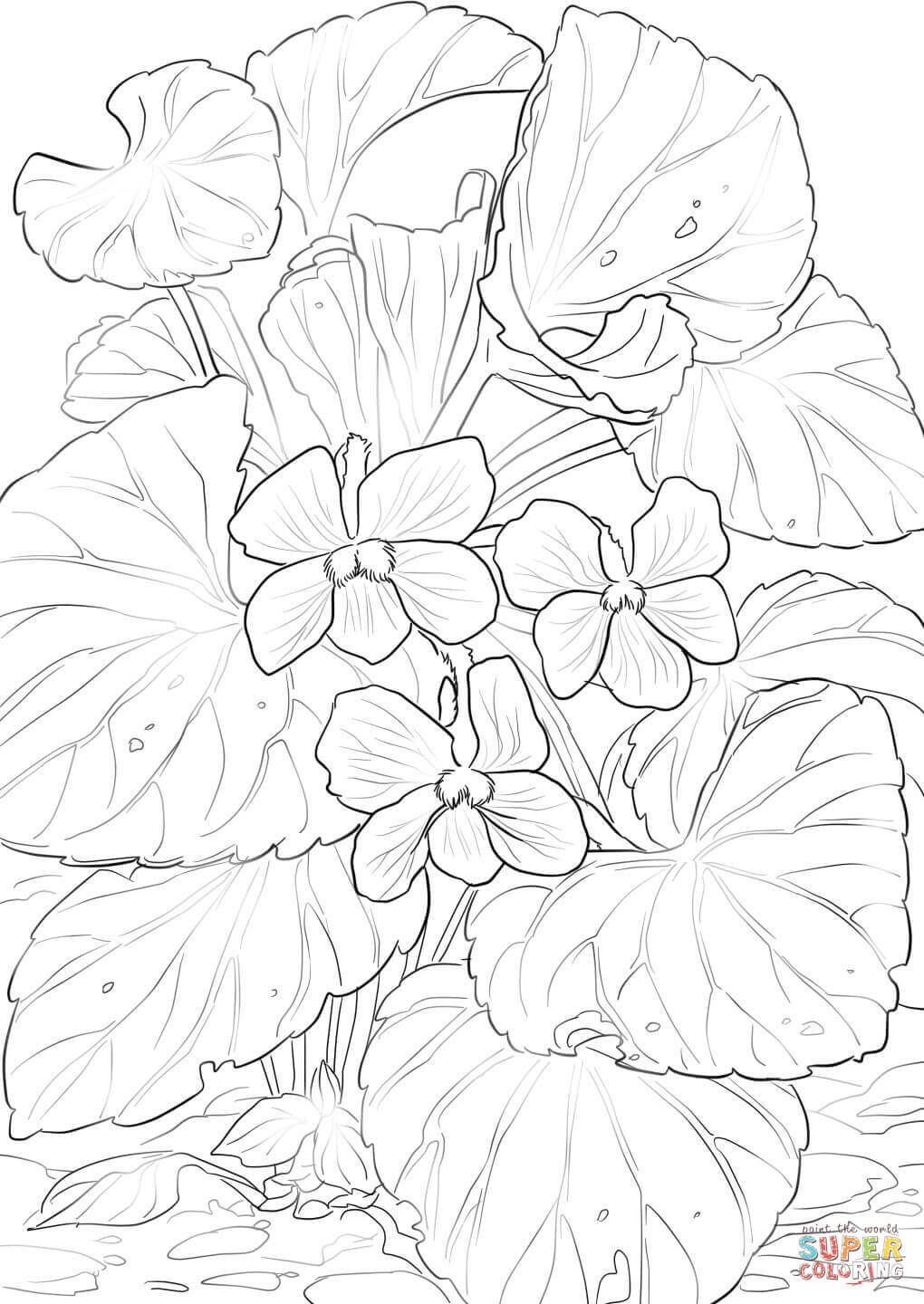 Wood Violets Flower Coloring Pages Coloring Pages Detailed Coloring Pages