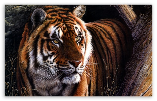 Beautiful Tiger Hd Wallpaper For 4k Uhd Widescreen Desktop Smartphone In 2020 Tiger Pictures Pet Tiger Tiger Art