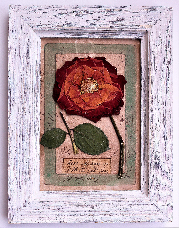 Pressed plants, Rustic Herbarium, pressed flower art, 8x6 inches (20 ...