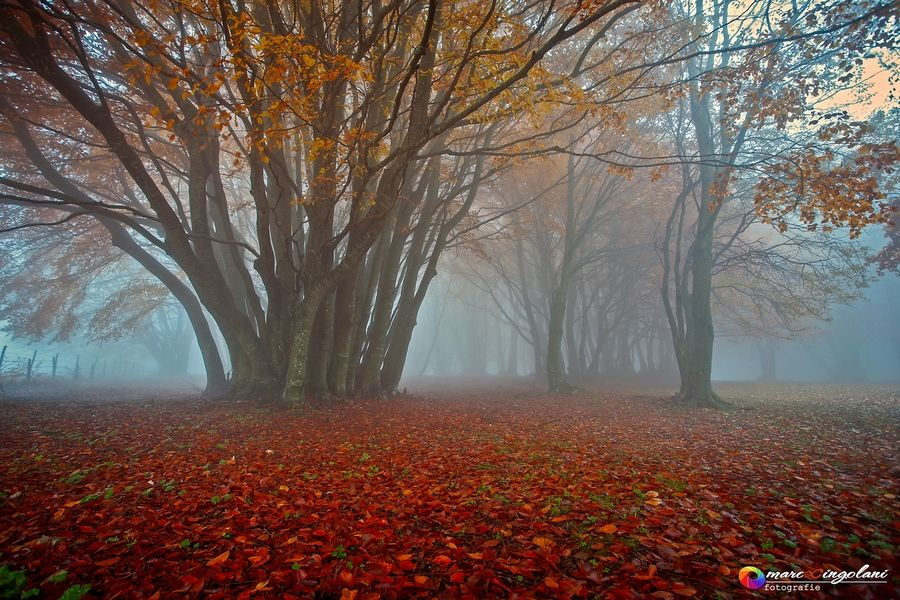 Autumn haze by Marco Cingolani, via 500px