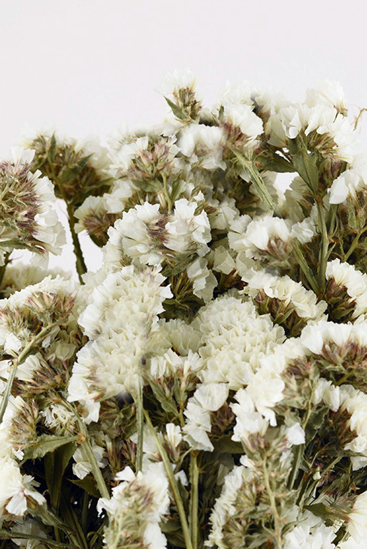 Dried white statice flowers wedding pinterest flowers corsage dried white statice flowers mightylinksfo