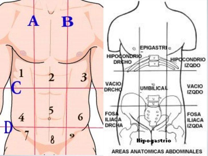División topografica del abdomen humano. | Anatomia general ...