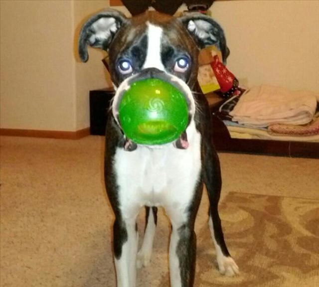 Attack Of The Funny Animals 22 Pics Funny Animals Animals Puppy Lover