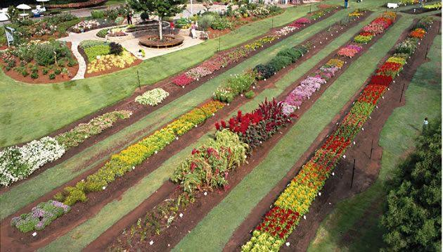 AAS Display Garden Park Seed Trial Gardens, Hodges, SC   AAS Display ...