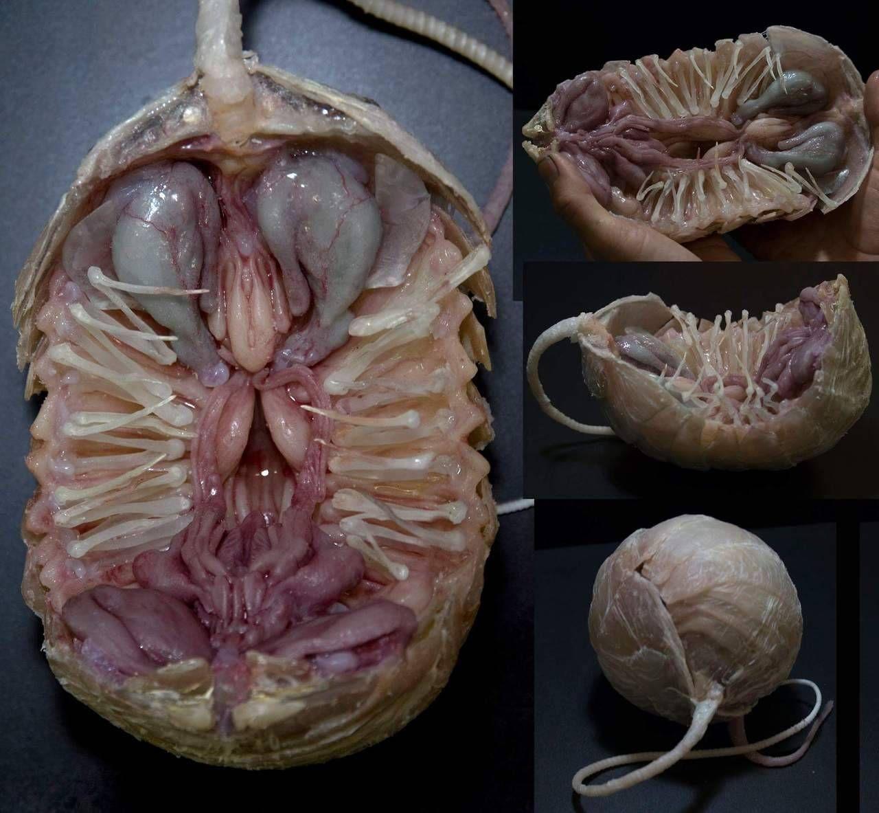 Alien Covenant. Unused proto facehugger for Creatures Inc/Odd Studio ...