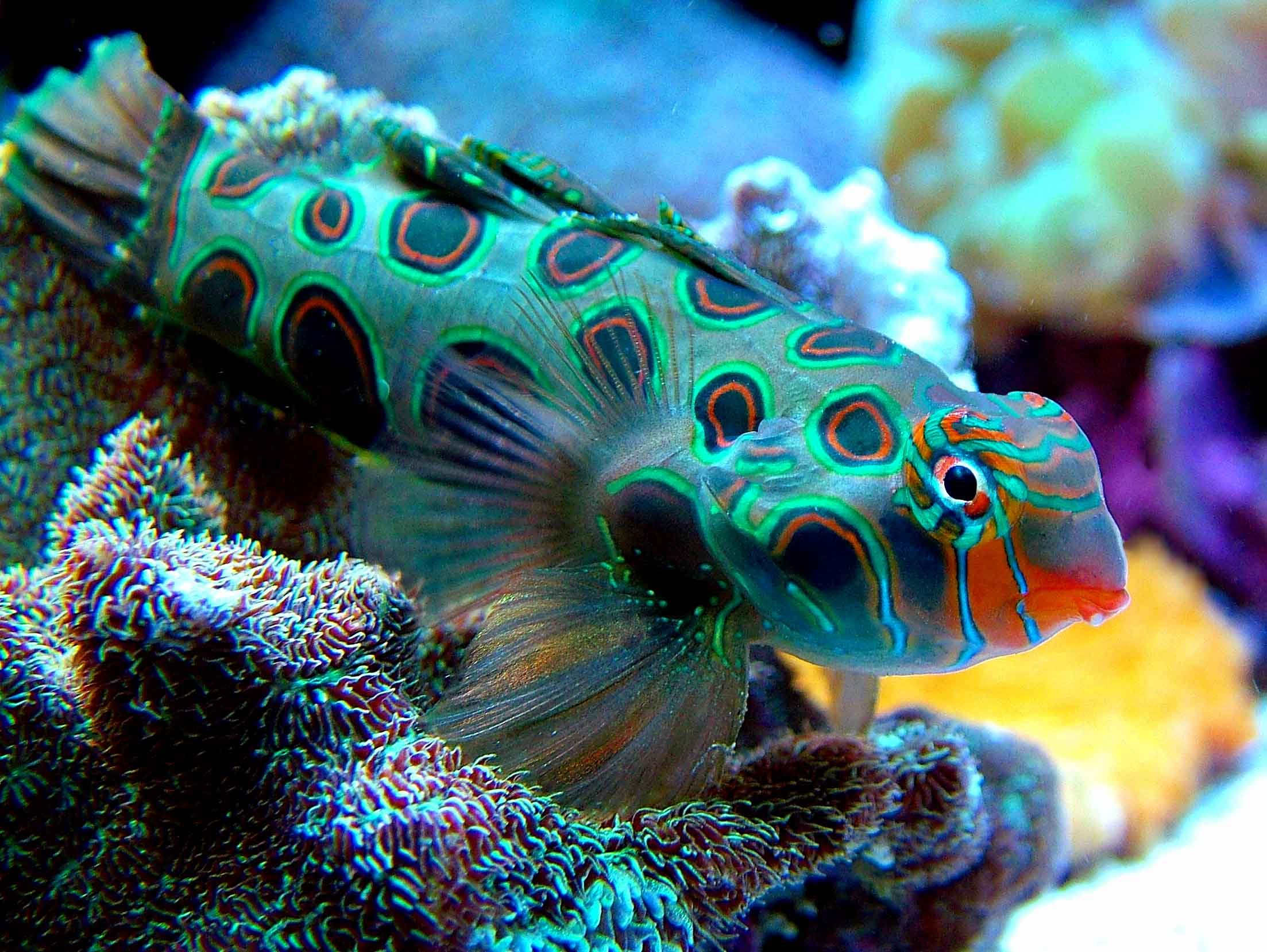 A typical fish found in the bahamas the bahamas is one of for Exotic saltwater fish