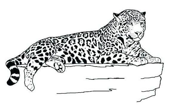 jaguar coloring page   Coloring Board   Pinterest