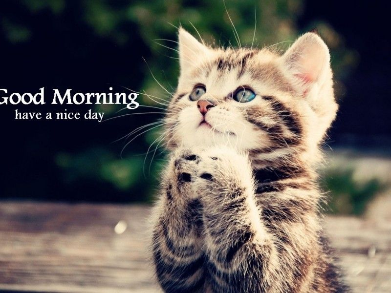75 Funny Good Morning Memes To Kickstart Your Day Cats Kittens Cutest Cute Cats