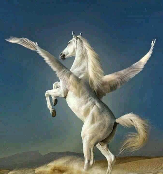 Vielleicht wird jedes Pferd, wenn es zum Himmel geht, ein Pegasus.