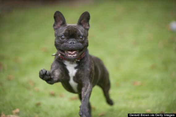 Dog Excited Google Search Excited Dog Dogs Funny Dog Photos